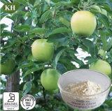 Extrato Phloridzin 40% da raiz de Apple da alta qualidade com preço de Comepetitive
