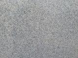 싼 회색 화강암은 중국 채석장에서 /Slabs G603를 타일을 붙인다