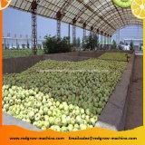 Gewundene Heber-Maschine für Gemüse-und Frucht-Prozess