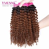 Colore riccio crespo brasiliano T1b/4 di estensione dei capelli umani di Ombre di modo di Yvonne