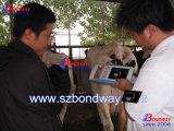 Dispositivo portátil ultra-sonografia veterinária por cavalo, vaca, ovelha, cabra, cães, gatos, Bateria, Sonda Linear Transretal, ultra-som de bovinos, equinos, ultra-som