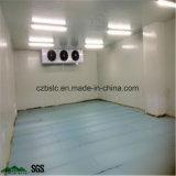 Conservación en cámara frigorífica, cámara fría, congeladora para la fruta y verdura