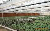 Rilievo di raffreddamento per evaporazione del favo della strumentazione 7090 del pollame di Guangzhou