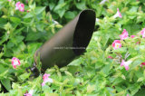 낮은 전압 옥외 정원 점화 중국 공장 판매를 위한 금관 악기 반점 빛