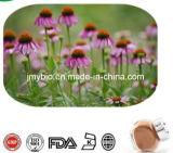 Cichoric Säure1%~4% Echinacea Purpurea Auszug-Polyphenole 2%~7%