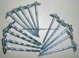 Telhas de prego galvanizado com cabeça de guarda-chuva para a construção