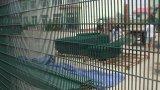 Проволочная изгородь 358 высокиев уровней безопасности