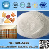 Hidrolizada Tilapia Piel / Escala colágeno péptido
