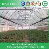 Chambres vertes en plastique de tunnel de Multi-Envergure pour la plantation