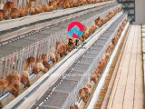 Chambre de grilleur de structure métallique pour le poulet de viande