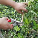 Proveedor de herramientas de jardinería profesional Barbero cizallas Pruner Hoja Flor