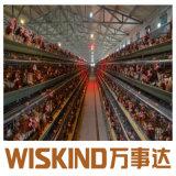 Estrutura de aço chineses Prefab Construção Casa de aves de capoeira