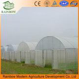 PC/FILME/vidro emissões com alta qualidade e preço vantajoso para produtos hortícolas