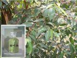 El 80% Puro y Natural de aceite de eucalipto globulus