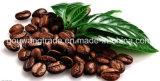 Кофеий пригодности дополняет самое лучшее теряет вес Slimming кофеий