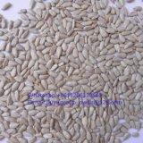 Стержень семян тыквы кожи Shine здоровой еды Gws