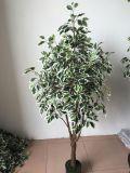 [هيغقوليتي] من اصطناعيّة معمل [فيكس] شجرة [غ1468052164577]