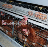 2-5tier Poultry Farm Battery Layer Cage de poulet (équipement de volaille)
