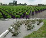 Esteira de Weed da tampa à terra para a agricultura e a paisagem