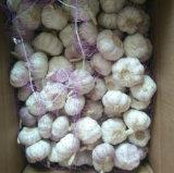 Aglio bianco normale fresco del nuovo raccolto (5.0cm)