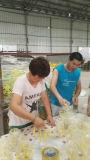 공장 주문 음식 진열대 식사 선반
