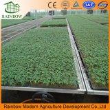 Los gases de semillero para el cultivo de plantas