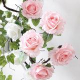 Procura real de videira flor rosa artificial de seda