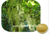 Выдержка Usnea функции 98% здоровья Usnic кисловочная
