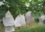 Bolsa de papel Kraft reciclables fruto Mango/bolsa de protección de dragón