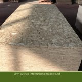 15 mm BSF2 OSB (Oriented Stand Board) pour la construction