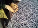 Rete metallica esagonale per l'alimentazione, galvanizzata o il PVC