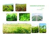 Uittreksel van de Rode Klaver van Isoflavoon 8%-80% van 100% het Natuurlijke