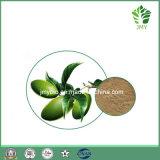 Выдержка листьев Oleuropein 20%~60% прованская, 100% естественное