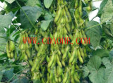 Aminosäure-Chelate-organischer Kalkdünger