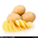 Línea de transformación fresca de las patatas fritas de la operación fácil