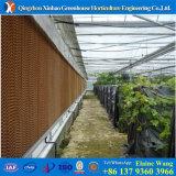 Da película do competidor da fábrica de China do custo casa verde hidropónica para o tomate
