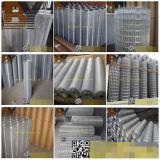 O PVC galvanizado revestiu o engranzamento de fio soldado Aviary do aço inoxidável