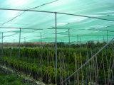 De groene Doek van de Schaduw/het In de schaduw stellen van de Netto/Groene Netto Schaduw van de Zon