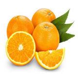 100% натуральным дистиллированной Апельсиновая масла / холод нажат сладкий оранжевый масла