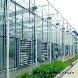 De Serre van het Glas van het Frame van het Staal van de multi-spanwijdte met Volledige Oplossing voor de Cultuur van de Paddestoel van de Ecologie