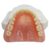 Haut de la résine acrylique dentier inférieur