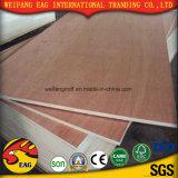 Pino del material de construcción/madera contrachapada del abedul/Bintangor/Okoume