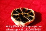 Alho preto Nutritious da fermentação