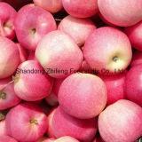 Frisches neues Getreide FUJI Apple mit etwas Wasser