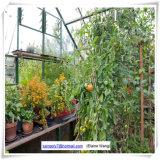 이용된 알루미늄 정원 온실