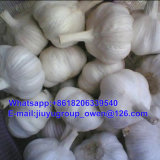 Shandong 최상 신선한 순수한 백색 마늘