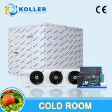 Montagem tipo sala fria para peixes, carnes, frutas e produtos hortícolas