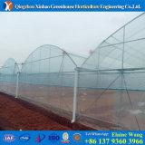 Casa verde de China del coste de la película competitiva de la fábrica hidropónica para el tomate