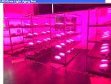 Индикатор UFO модернизации по мере роста лампа15Вт -150 Вт расти лампа Ce RoHS перечисленных светодиодный индикатор для роста растений теплиц и системы гидропоники Highbay