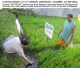 A melhoria de solo para o arroz que planta, promove o crescimento da raiz bem, Doença-Resistindo